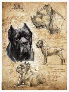 Cãezinhos Bulldog, Bulldog Mascot, Bulldog Breeds, Cane Corso Italian Mastiff, Cane Corso Dog, Beautiful Dog Breeds, Best Dog Breeds, Dog Photos, Dog Art