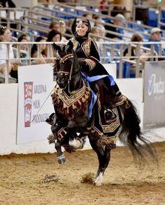Scottsdale Arabian Horse Show News for Tuesday, February 17, 2015 :: Arabian Horse Association of Arizona