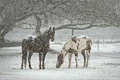 Caballo, Equino, Snow, Nevada, Invierno