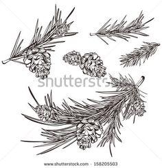 hand drawn retro pine branches - stock vector