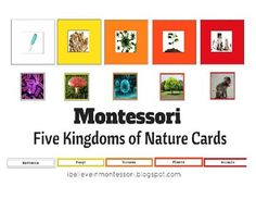 Montessori Five Kingdoms of Nature Classification CardsThis material is one of the first Montessori biology materials that introduces your child to five nature kingdoms.I know that there are different views on the number and members of the kingdoms, so this is how we see and use it here.Your child will learn that there are five kingdoms of nature - bacteria, fungi, viruses, plants and animals.