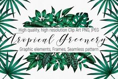 Tropical Greenery – Clip Art. PNG. by ARTVracovska on @creativemarket