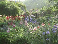 Cottage style garden including iris and poppies | reginaz