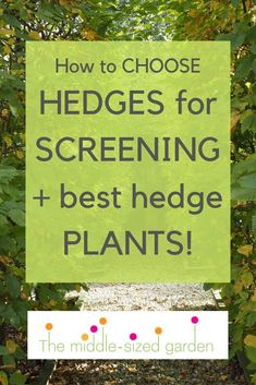 really need to know about evergreen hedges for privacy How to choose the best hedges for privacy and screening for your front yard and back garden.How to choose the best hedges for privacy and screening for your front yard and back garden. Garden Privacy Screen, Privacy Hedge, Patio Privacy, Privacy Screens, Small Garden Hedges, Garden Bed, The Middle, Hedges Landscaping, Outdoor Landscaping