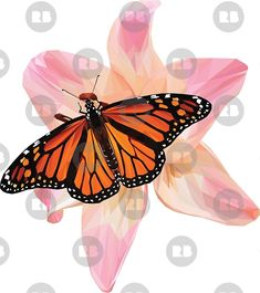 'Beautiful low poly Monarch Butterfly on a Pink Lily' by ErinFCampbell Pink Lily, Monarch Butterfly, Low Poly, Art Boards, Wall Tapestry, Decorative Throw Pillows, Chiffon Tops, Iphone Cases, Framed Prints