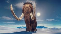 Mammoth's epic travels preserved in tusk Elephant Species, Academy Of Sciences, Arctic Circle, Exotic Pets, Geology, Mammals, Wildlife, Stock Photos, Explore