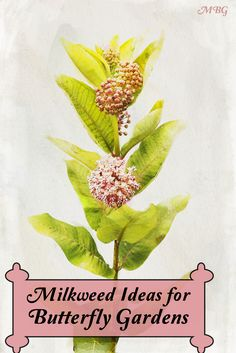 25 Milkweed Plant Ideas for Supporting Monarch Butterflies, Caterpillars, and other Beneficial Pollinators in your Butterfly Discover milkweed options for your region and learn where you can find milkweed seeds and plants. Aesthetic Header, Fresco, Butterfly Garden Plants, Butterfly Feeder, Milkweed Plant, Hummingbird Garden, Monarch Butterfly, Butterfly Project, Butterfly House