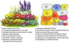 Схемы клумб непрерывного цветения из многолетников. Узнайте какие цветы годятся для образования клумбы непрерывного цветения. Вариации различных схем. Советы по размещению цветов в клумбе.