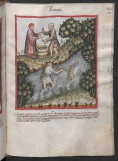 Folio 84r (page 171). Tacuinum sanitatis, Codex Vindobonensis, series nova 2644. Northern Italy, probably Verona, 1380-1399.