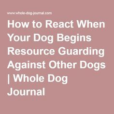 How to React When Your Dog Begins Resource Guarding Against Other Dogs | Whole Dog Journal