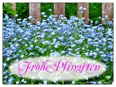 Bilder und Grußkarten zu Pfingsten. Ich wünsche allen Freunden ein schönes Pfingsten.  Grußkarten für Pfingsten.  I wish all friends a nice Pentecost.  Greeting cards for Pentecost.