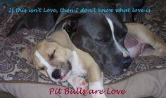 pitbulls banner | PIT BULLS :: PIT BULL picture by brimom_2008 - Photobucket