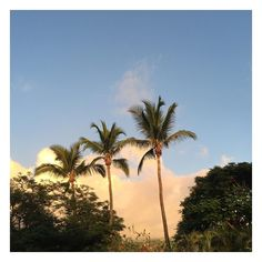 Sunset  #reunionisland #réunionisland #reunionparadis #iledelareunion #team974 #974#instadetente #sunsetporn #sunset#summer #summerday #summertime #sky #skyporn #palm #palmtree #clouds #paradise#heaven#instadaily #photooftheday #photograph #picoftheday #picofday #photographie #photography #island#islander by enjoy_boudine