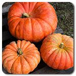 Organic Cinderella, Rouge vif d�Etampes Pumpkin #highmowingseeds Cinderella shaped pumkins in every color available. That's my dream patch.