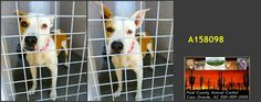 AZ - Dies Tomorrow 11/16 - Please adopt or foster to save.  Needs a Family Now.