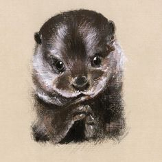🌿 Happy World Animal Day 🌿  We are all huge animal lovers at Bill Skinner! Here's one Lucy from our studio sketched for our AW16 Lookbook of the cutest Otter being incredibly adorable! ❤️✨ . . . #BillSkinner #Otter #Otters #illustration #illustrator #illustrations #sketch #artistsoninstagram #craft #pencilsketch #worldanimalday ✏️Lucy Shaw