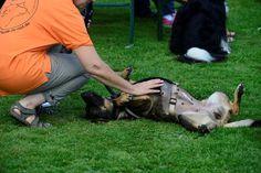 Streicheleinheiten zwischendurch: Die Hunde haben beim Treffen des Göttinger Boxer-Clubs ihren Spaß.