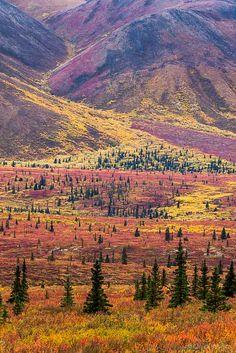 Autumn in Denali National Park, Alaska, USA