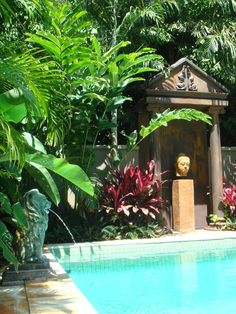 1000 images about pool landscaping on pinterest pools for Plants for pool area