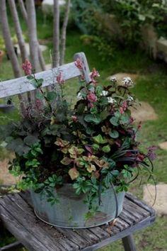 花の少ない季節に彩りを☆カラーリーフの寄せ植え☆長く楽しむの画像 Container Plants, Container Gardening, Garden Urns, Outdoor Pots, Natural Garden, Foliage Plants, Types Of Plants, Green Flowers, Garden Inspiration