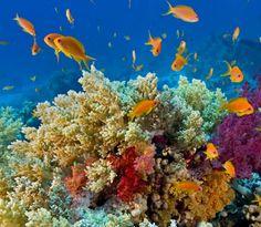 Scuba diving in Great Barrier Reef - Australia