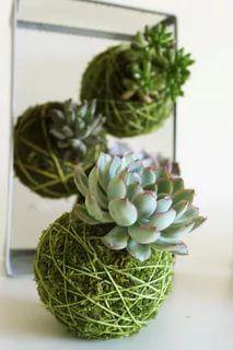 kokedama :: japanese string garden using succulents Hanging Succulents, Cacti And Succulents, Hanging Plants, Hanging Gardens, Diy Hanging, Succulent Gardening, Succulent Terrarium, Container Gardening, Organic Gardening