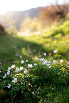 I springtime l
