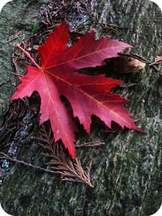 Le cose di Mirtilla : Autumn...my love
