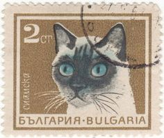 Bulgarian Siamese stamp, 1967  http://colnect.com/en/stamps/stamp/258487-Siamese_cat-Cats-Bulgaria