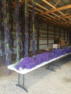 The plants dry for five to six weeks and then are distilled down for their potent, fragrant oils. Towns In Wisconsin, Door County Wisconsin, Sturgeon Bay Wisconsin, Washington Island, Lavender Recipes, Growing Flowers, Cut Flowers, Dried Flowers, Chicago Restaurants