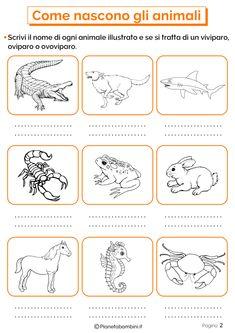 Italian Language, Science, Mason Jar Diy, Elementary Schools, Homeschool, Classroom, Bullet Journal, Animals, Geography