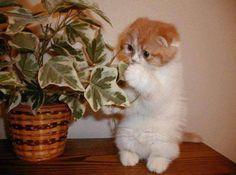 mmmm a veeer!!!!! vamosa revisar estas plantas!!!!!!!!