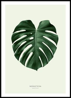 Botanical print with monstera.