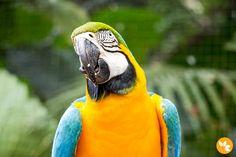 Maior viveiro de Araras da América do Sul - Parque das Aves - Foz do Iguaçu