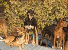 These are the 10 most courageous breeds of adorable dog that are brave, bold and beautiful Family Friendly Dogs, Belgian Malinois Dog, The Kennel Club, Doberman Pinscher, New Puppy, Large Dogs, Dog Friends, Dog Owners, Dog Pictures