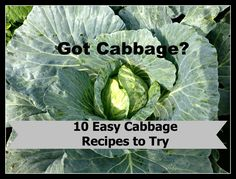 Ten Easy Cabbage Recipes to Try - We Got Real