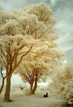 May not be a wintery scene but it looks like one. Real pretty.