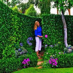 Perfect tall hedges provide privacy screen and a secret path to hide unsigthly utility area. Landscape designer Brenda Gousha planted two 6-foot-long overlapping Carolina Cherry Laurel and the result is simply gorgeous.