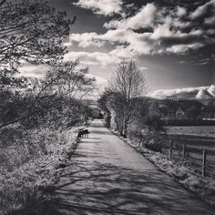 It's this time of year where you can spend all your time outside  #countryside #scotland #scottishborders #skyporn #contrast #bold #jj_creative #jj_mextures #instagood #igmasters #chasingessence #chasingtrees #blackandwhite #monochrome #bw_square #dogsofinstagram #blacklabrador #petsarepeopletoo #photooftheday #touserv #jj_nature
