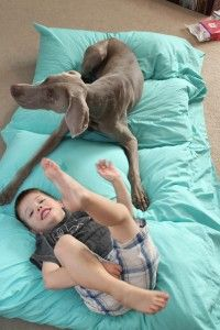 I love the king-size pillow better than standard, since my kiddos, as with this posters, move like crazy as they sleep! Awesome dog bed idea too! Cheap Dog Beds, Cool Dog Beds, Sewing Hacks, Sewing Crafts, Sewing Projects, Baby Play, Baby Kids, Crafty Christmas Gifts, Pillow Mat