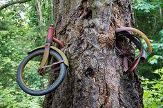 the tree that ate a bike