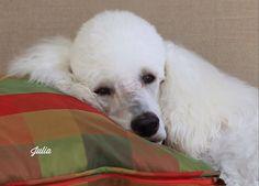 "Julia - ""My favorite pillow"""