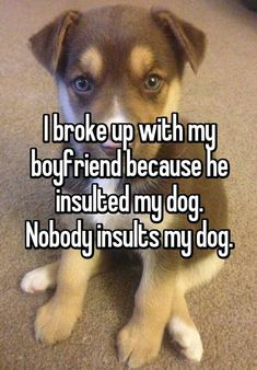 Stupid Funny, Funny Texts, Funny Jokes, Hilarious, Dog Quotes Funny, Memes Humor, Cat Memes, Sweet Stories, Cute Stories