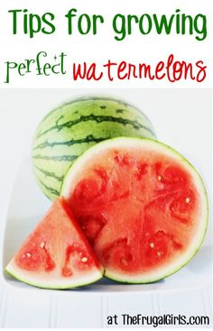 Tips for Growing Perfect Watermelons from TheFrugalGirls.com