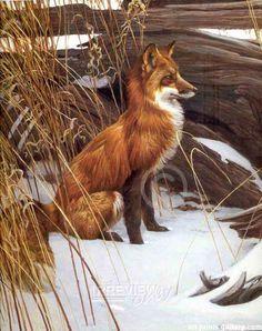 Red Fox painting by Robert Bateman Wildlife Paintings, Wildlife Art, Animal Paintings, Art Fox, Illustrations, Illustration Art, Historia Natural, Images Vintage, Canadian Art