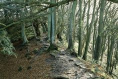 An poster sized print, approx (other products available) - OFFA& DYKE, Gloucestershire. General view with trees, built by Offa, King of Mercia - Image supplied by Historic England - Poster printed in the USA Framed Prints, Canvas Prints, Art Prints, Photo Library, A4 Poster, Poster Size Prints, Photo Puzzle, Photo Mugs, Country Roads