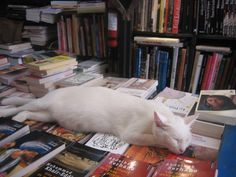 A well content cat, or should that be a well read cat