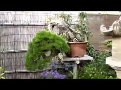 BEST  COLLECTIONS  OF  BONSAI   TREES