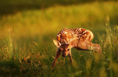 Beautiful Nature Animals   think the most beautiful pictures are those made in nature animal ...