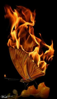 Fire: #Fiery butterfly.